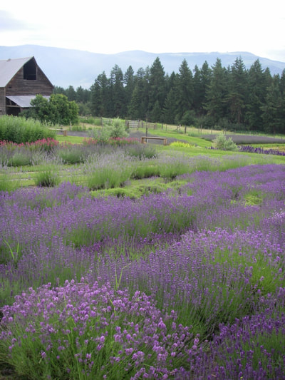 Hartwood North Farm Certified Organic Lavender